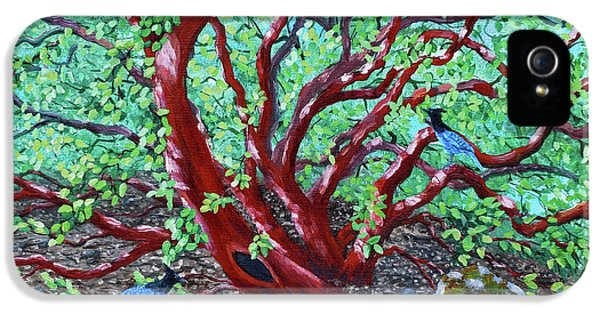 Morning Manzanita IPhone 5s Case by Laura Iverson