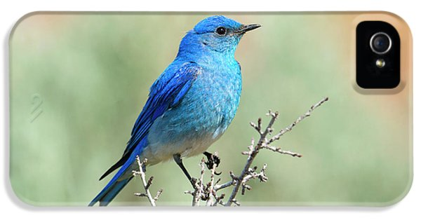 Mountain Bluebird Beauty IPhone 5s Case by Mike Dawson