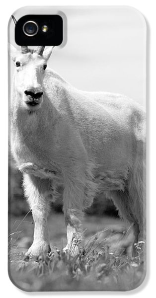 Mountain Goat IPhone 5s Case by Sebastian Musial