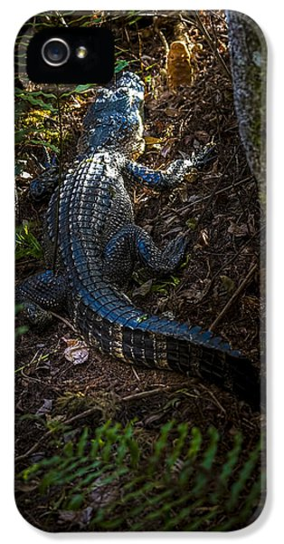 Mr Alley Gator IPhone 5s Case by Marvin Spates