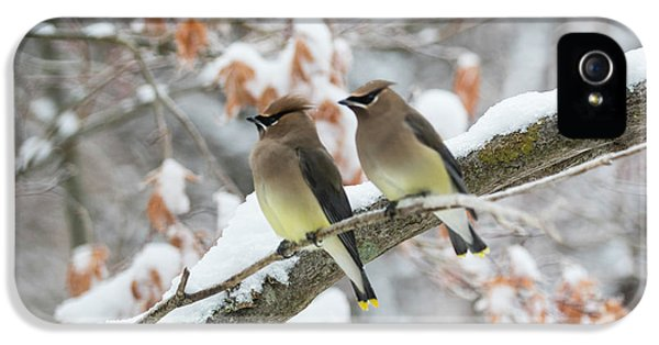 Mr. And Mrs. Cedar Wax Wing IPhone 5s Case