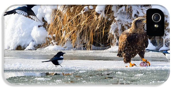 Magpies iPhone 5s Case - My Lunch by Mike Dawson