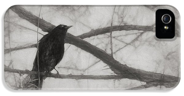 Nevermore IPhone 5s Case by Melinda Wolverson