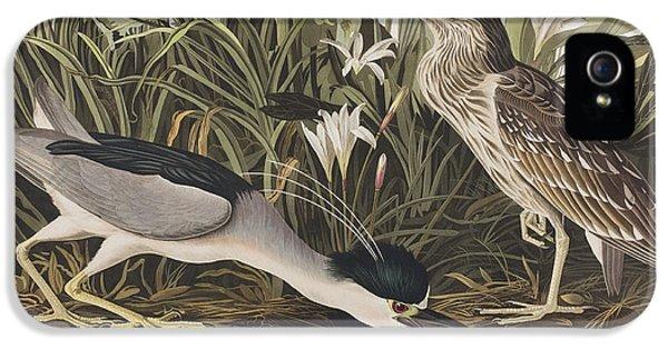 Night Heron Or Qua Bird IPhone 5s Case by John James Audubon
