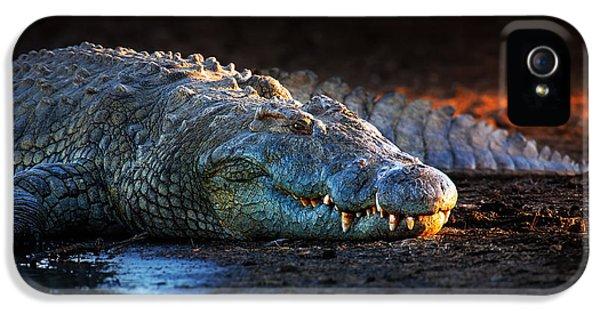 Nile Crocodile On Riverbank-1 IPhone 5s Case by Johan Swanepoel