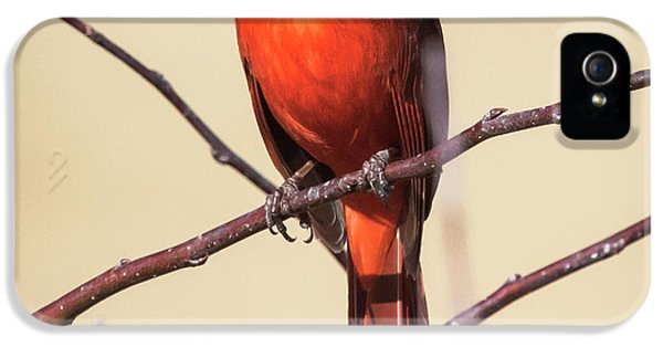 Northern Cardinal Profile IPhone 5s Case by Ricky L Jones