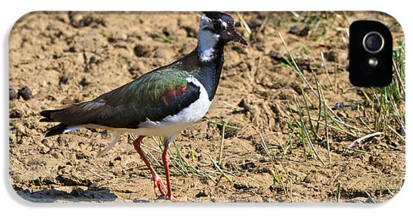 Northern Lapwing IPhone 5s Case by Louise Heusinkveld