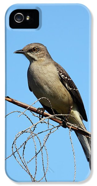 Mockingbird iPhone 5s Case - Northern Mockingbird by Bruce J Robinson