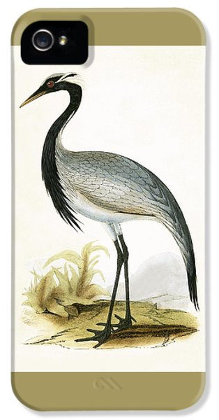 Numidian Crane IPhone 5s Case by English School