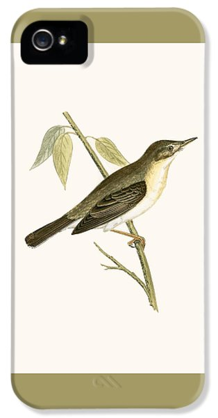 Olivaceous Warbler IPhone 5s Case by English School