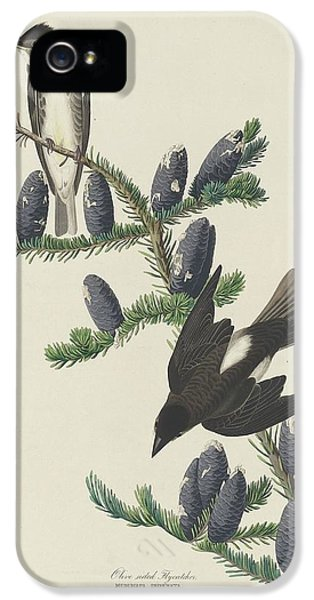 Flycatcher iPhone 5s Case - Olive-sided Flycatcher by Dreyer Wildlife Print Collections