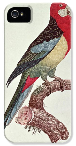 Omnicolored Parakeet IPhone 5s Case by Jacques Barraband