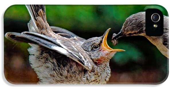 Mockingbird iPhone 5s Case - Open Wide by Sue Melvin
