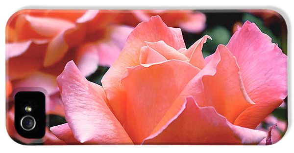 Orange-pink Roses  IPhone 5s Case by Rona Black