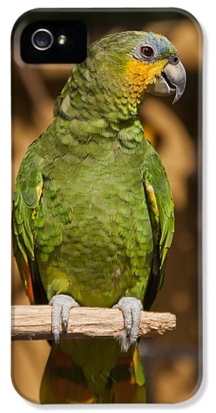 Macaw iPhone 5s Case - Orange-winged Amazon Parrot by Adam Romanowicz