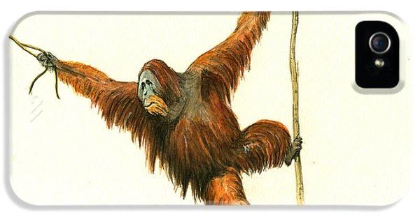 Orangutan IPhone 5s Case by Juan Bosco