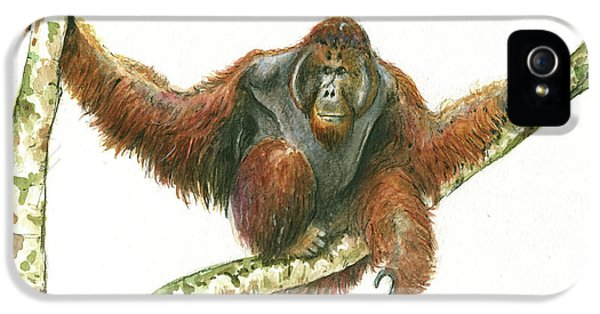 Orangutang IPhone 5s Case by Juan Bosco