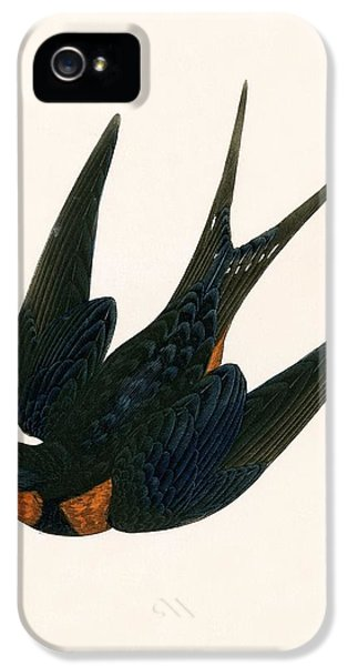Oriental Chimney Swallow IPhone 5s Case by English School