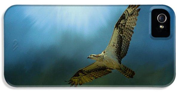 Osprey In The Evening Light IPhone 5s Case by Jai Johnson