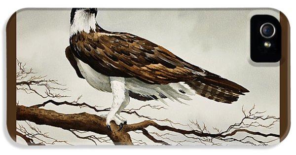 Osprey Sea Hawk IPhone 5s Case by James Williamson