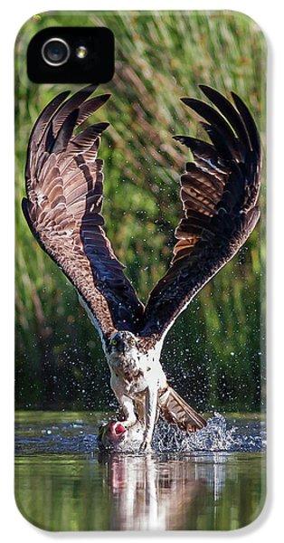 Osprey iPhone 5s Case - Osprey - Strike by Pat Speirs