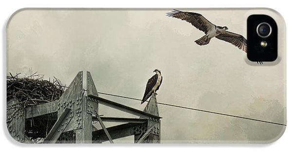 Ospreys At Pickwick IPhone 5s Case by Jai Johnson