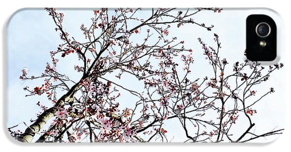 iPhone 5s Case - Overhead Branches by Julie Gebhardt