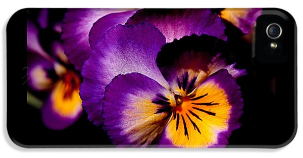 Pansies IPhone 5s Case by Rona Black