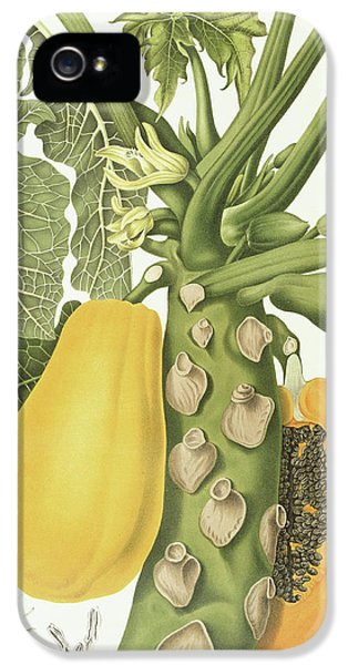 Mango iPhone 5s Case - Papaya by Berthe Hoola van Nooten