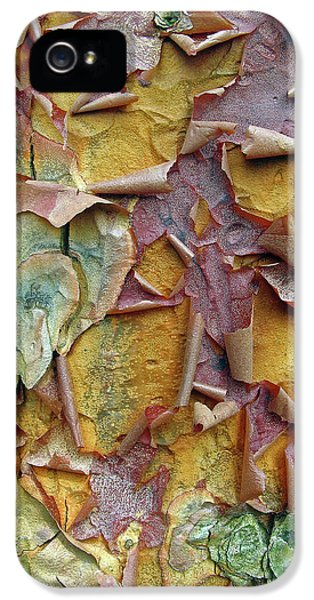 Paperbark Maple Tree IPhone 5s Case by Jessica Jenney