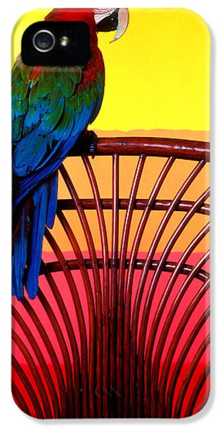 Macaw iPhone 5s Case - Parrot Sitting On Chair by Garry Gay