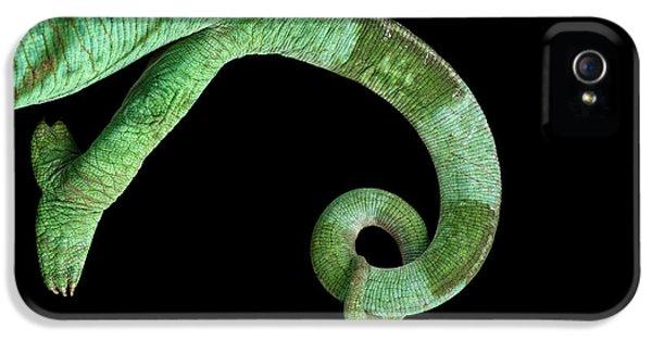 Parson Chameleon, Calumma Parsoni On Black Background, Top View IPhone 5s Case by Sergey Taran