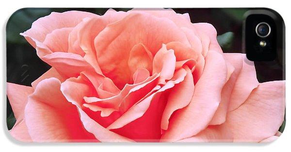 Peach Rose IPhone 5s Case