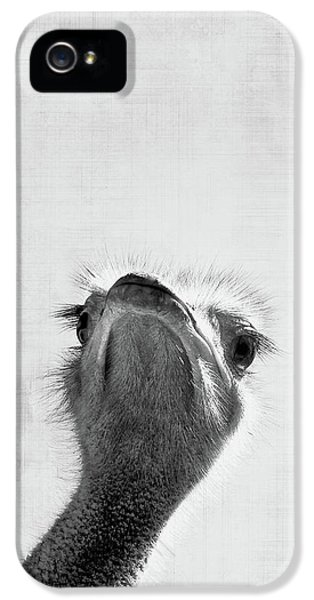 Ostrich iPhone 5s Case - Peekaboo Ostrich by Delphimages Photo Creations