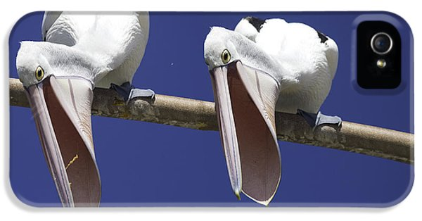 Pelican Burp IPhone 5s Case by Avalon Fine Art Photography