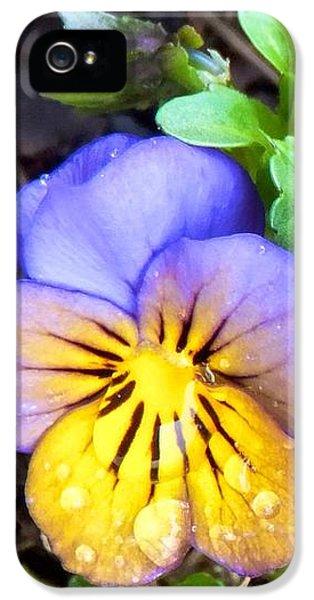 Pensees Bicolores IPhone 5s Case