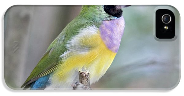 Perched Gouldian Finch IPhone 5s Case