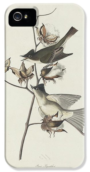 Flycatcher iPhone 5s Case - Pewit Flycatcher by Dreyer Wildlife Print Collections