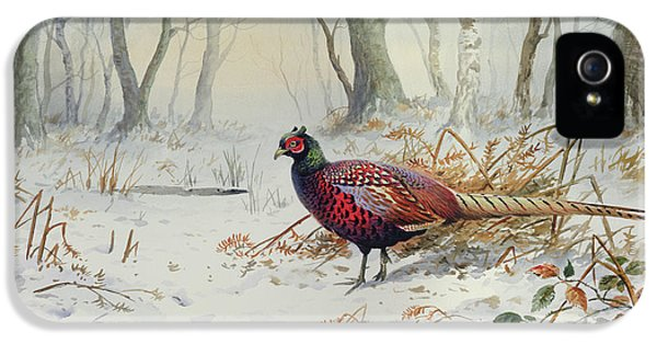 Pheasants In Snow IPhone 5s Case by Carl Donner
