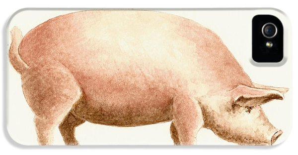 Pig IPhone 5s Case by Michael Vigliotti