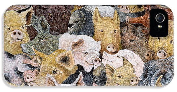 Pigs Galore IPhone 5s Case by Pat Scott
