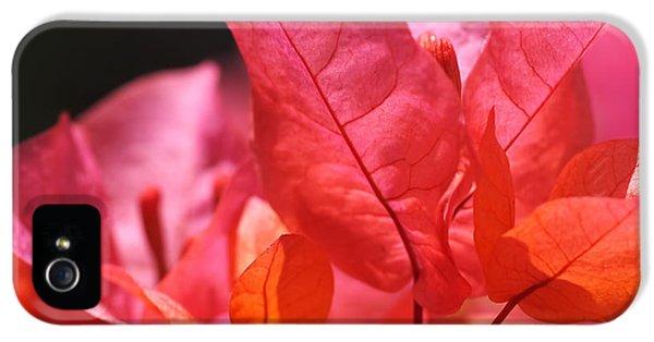 Pink And Orange Bougainvillea - Square IPhone 5s Case