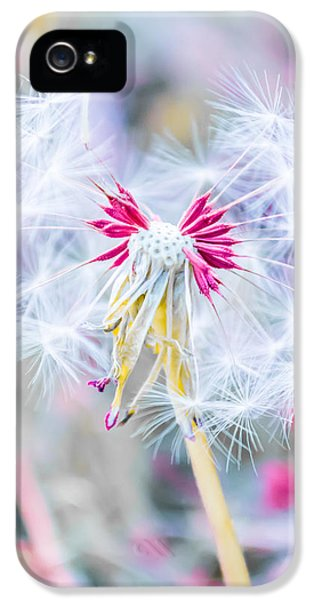 Macro iPhone 5s Case - Pink Dandelion by Parker Cunningham