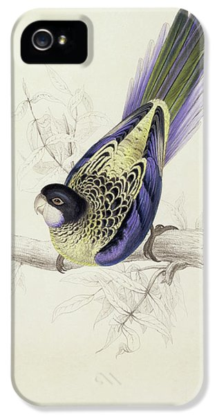Platycercus Brownii, Or Browns Parakeet IPhone 5s Case by Edward Lear