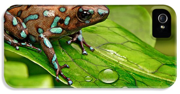 poison art frog Panama IPhone 5s Case by Dirk Ercken
