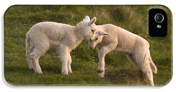 Sheep iPhone 5s Case - Poke by Angel Ciesniarska