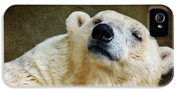 Polar Bear iPhone 5s Case - Polar Bear by Angela Doelling AD DESIGN Photo and PhotoArt