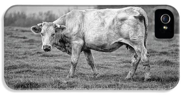 Cow iPhone 5s Case - Portrait Of A Cow by Nailia Schwarz