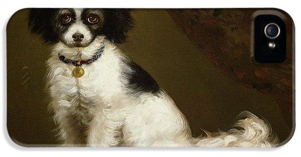 Portrait Of A Spaniel IPhone 5s Case