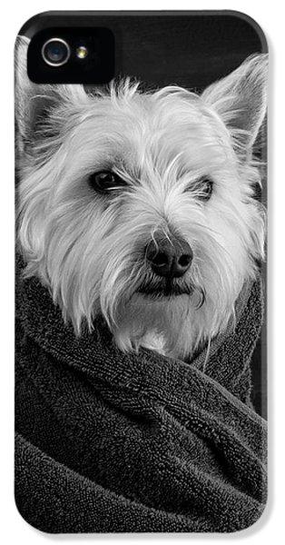 Portrait Of A Westie Dog IPhone 5s Case by Edward Fielding